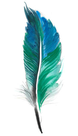 Green blue  feather Imagens - 106024052