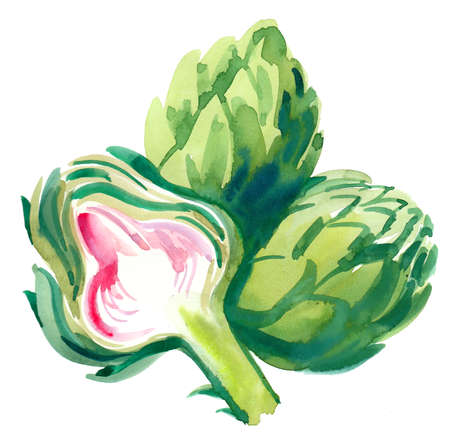 Watercolor painting of an artichoke vegetables
