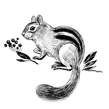 Squirrel and berries. Ink black and white drawing Stok Fotoğraf