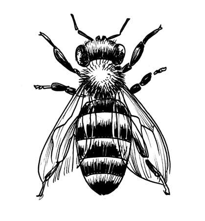 Bee insect. Ink black and white Stok Fotoğraf