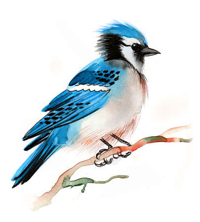 Blue jay bird on a tree. Ink and watercolor illustration Banque d'images