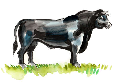 Ink and watercolor illustration of a standing black bull Stock fotó