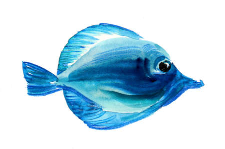Blue coral fish on a white background. Watercolor sketch Stockfoto - 108880420