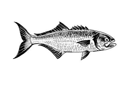 Ink black and white sketch of a sea fish on a white background
