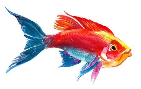 Aquarellskizze eines hellen tropischen Fisches auf einem weißen Hintergrund Standard-Bild