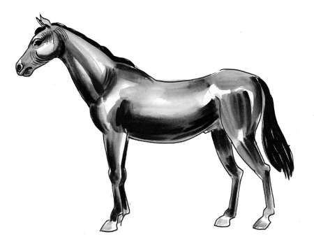 Standing black horse. Ink and watercolor illustration Stok Fotoğraf