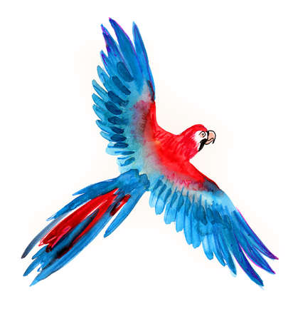 Flying parrot bird.  illustration Stock Photo