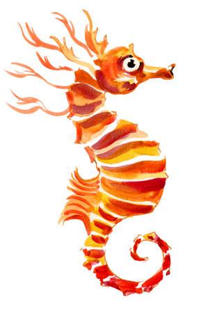 Orange  seahorse 스톡 콘텐츠