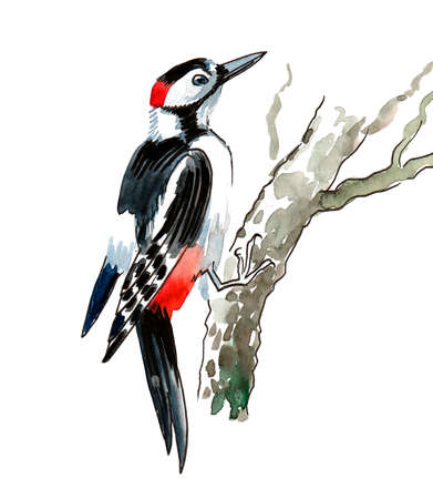 Woodpecker on a tree. Ink and  illustration Stock Photo
