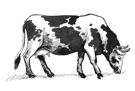 Cow grazing in the field. Ink black and white drawing Stok Fotoğraf