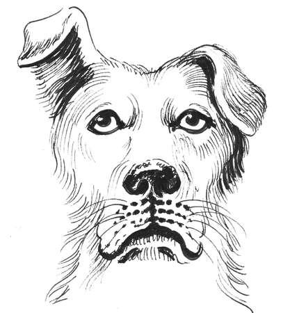 Sad dog head. Ink black and white drawing