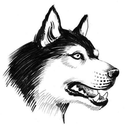 Husky dog head. Ink black and white drawing Stok Fotoğraf