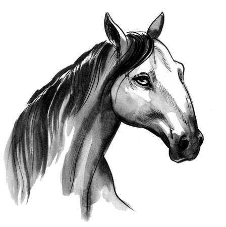 Horse head. Ink and watercolor