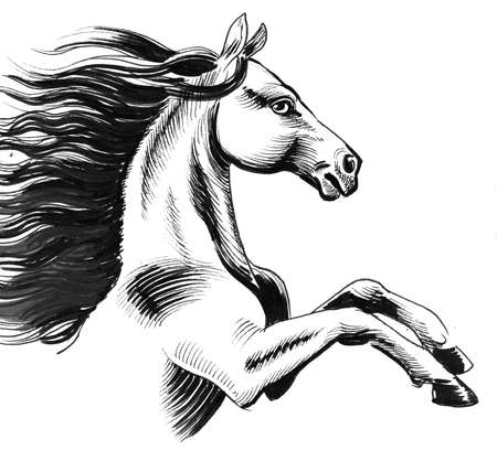 White horse with long mane. Ink black and white drawing