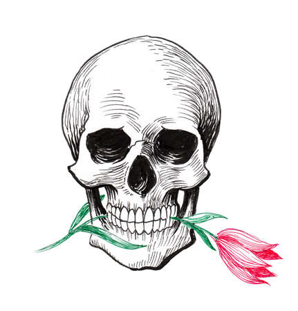 Skull and tulip flower. Ink drawing Stok Fotoğraf - 120883413