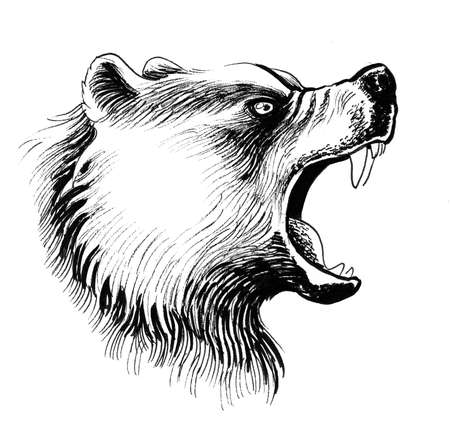 Mad bear. Ink black and white drawing
