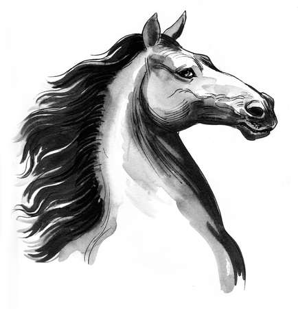 Beautiful horse head. Ink and watercolor illustration