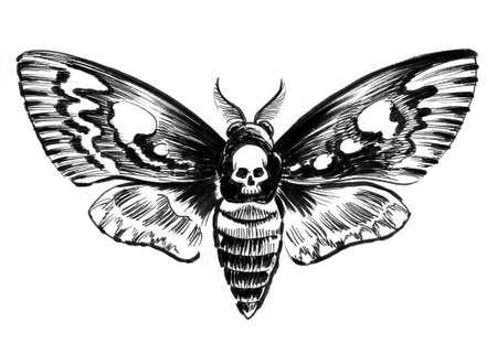 Night moth with a human skull. Ink black and white drawing