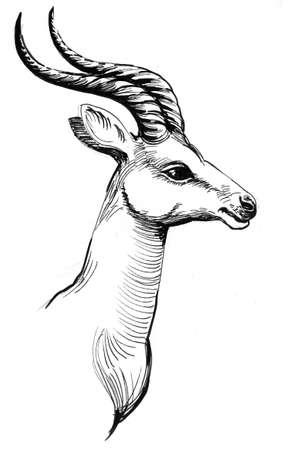 head of an African antelope. Ink black and white drawing