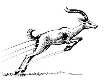 Running antelope. Ink black and white drawing