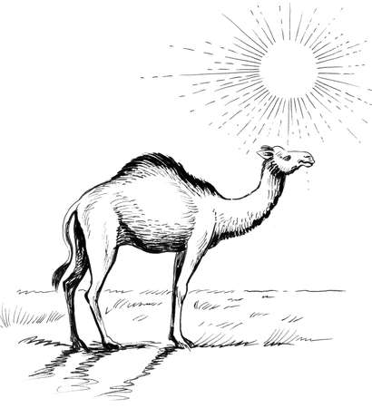 Camel in the desert. Ink black and white drawing Foto de archivo - 137213458