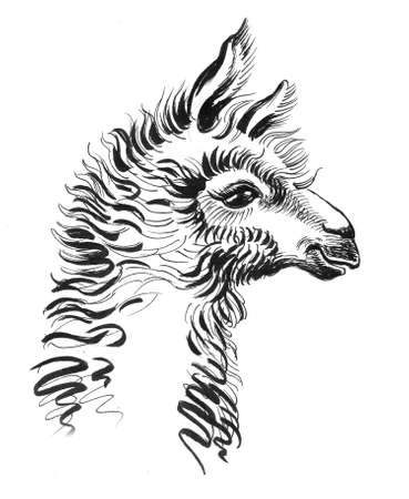 Lama animal, head. Ink black and white drawing