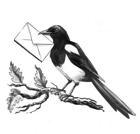 Magpie bird with a letter envelope on a tree branch Zdjęcie Seryjne - 137592354