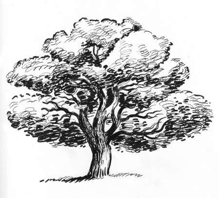 Old oak tree. Ink black and white drawing Zdjęcie Seryjne - 137592359