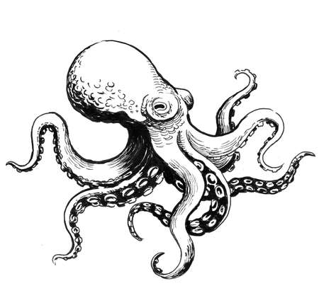 Octopus animal. Ink black and white drawing