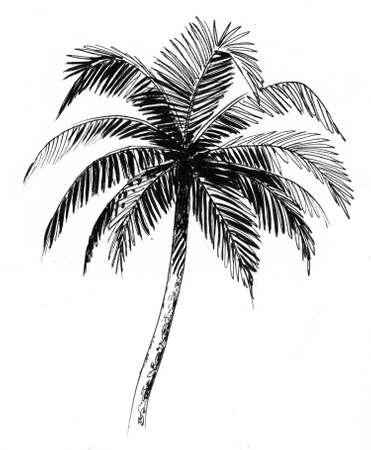 Palm tree. Ink black and white drawing Zdjęcie Seryjne - 137592364