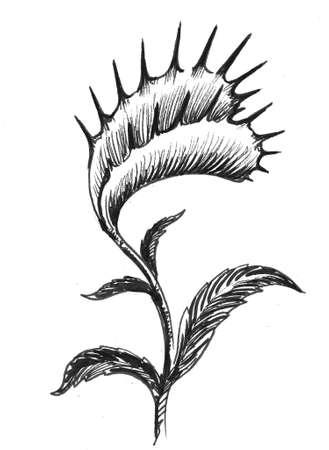 Carnvorous plant. Ink black and white drawing Zdjęcie Seryjne - 137592455
