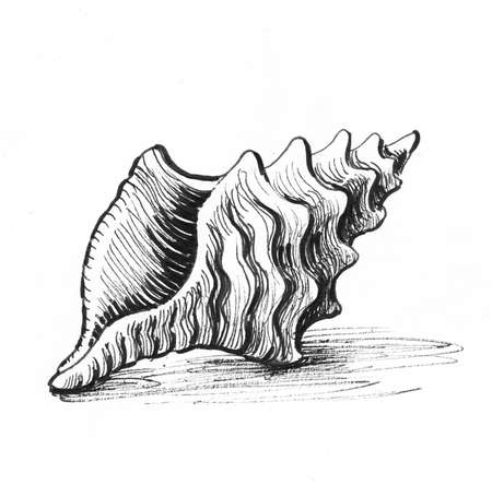 Seashell. Ink black and white drawing