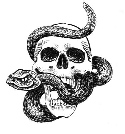 Skull with a rattle snake. Ink black and white drawing