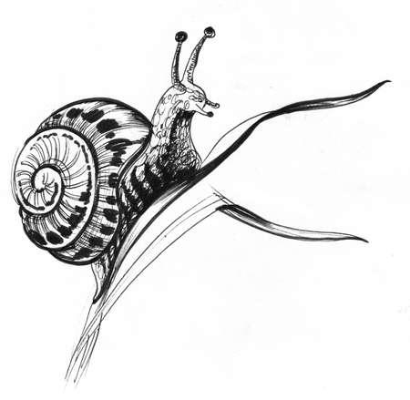 Snail on the grass. Ink black and white drawing Zdjęcie Seryjne - 137592465