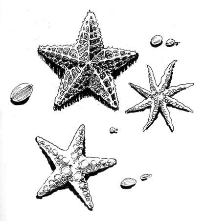 Starfishes on the beach. Ink black and white drawing