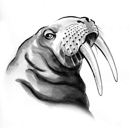 Walrus head. Ink and watercolor drawing Zdjęcie Seryjne - 137592560