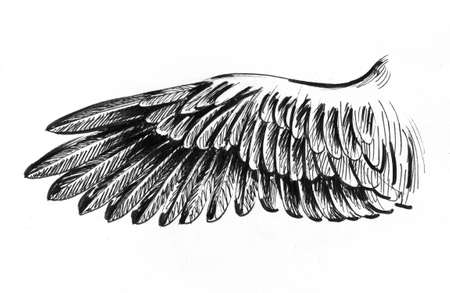 Bird wing. Ink black and white drawing,