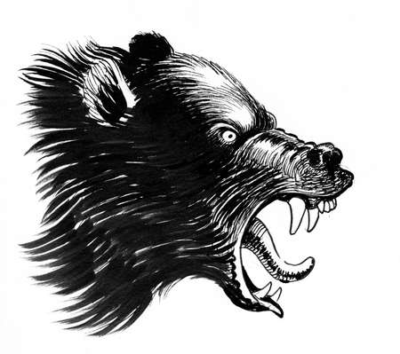 Angry grizzly bear. Ink black and white drawing
