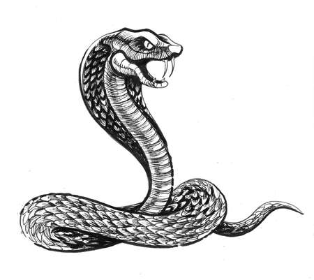 Angry cobra snake. Ink black and white drawing