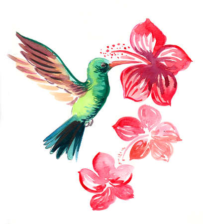Humming bird and tropical flowers. Watercolor painting 版權商用圖片