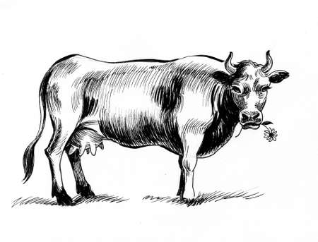 Cow chewing flower. Ink black and white drawing Banco de Imagens