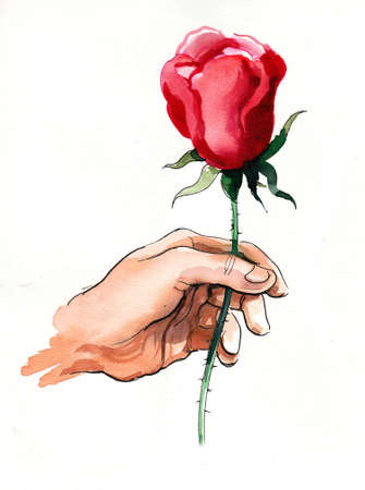 Hand holding a red rose flower. Ink and watercolor drawing Banco de Imagens