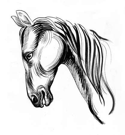 Horse head. Ink black and white drawing