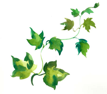 Ivy plant watercolor painting
