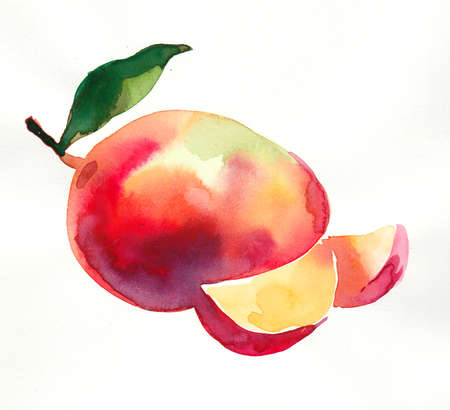 Mango fruit watercolor painting