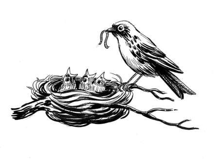 Bird feeding its babies in the nest. Ink black and white drawing Zdjęcie Seryjne - 137767502
