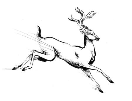Running wild deer. Ink black and white drawing