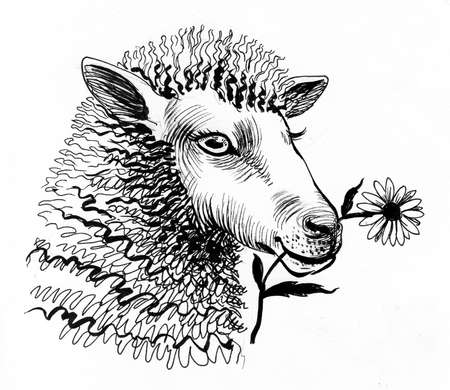 Sheep chewing a flower. Ink black and white drawing