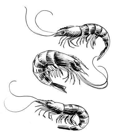 Sea shrimps. Ink black and white drawing