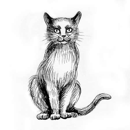 Sitting cat. Ink black and white drawing Zdjęcie Seryjne